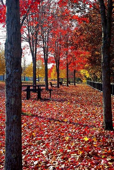 Autumn in Brooklyn, Connecticut by Alberto  DeJesus