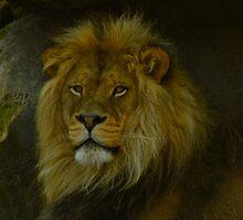 Pride Land by Laddie Halupa