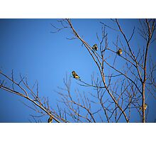 Yellow Birdies  Photographic Print