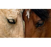Face to Face Photographic Print