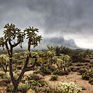 A Foggy Arizona Morning  by Saija  Lehtonen