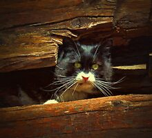 Cat Hiding by artstoreroom