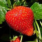 Natural Sweets - Fresh Garden Strawberry - NZ by AndreaEL