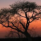 A Londolozi Sunset by jozi1
