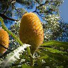 Banksia by Darren Speedie