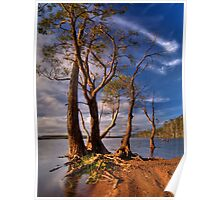 Lake Leake Gum Trees Poster