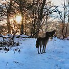 a wee winter walk by joak