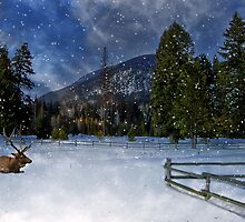 Montana Winter by Kathy Weaver