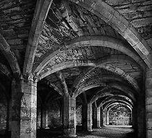 Cellarium by Dave Tucker