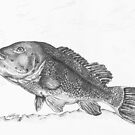 Tautog by Kathleen Kelly-Thompson