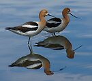 AVOCETS by Betsy  Seeton