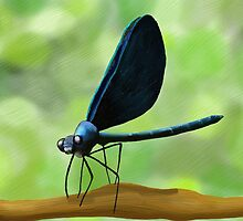 Black Winged Damselfly Original Painting Print by ArtformDesigns