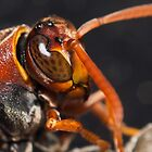 Wasp macro by Justin Knewstub