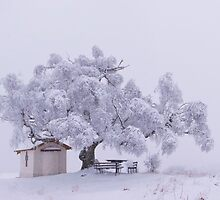 The Old Birch And Winter by ambiaso