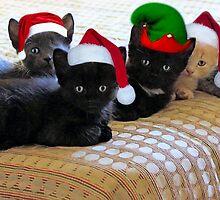 Happy Holidays Y'all! by SuddenJim