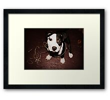 What makes you think I got into the Christmas presents? Framed Print