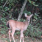White Tailed Deer by JeffeeArt4u