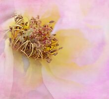 faded beauty by Teresa Pople