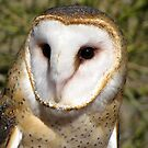 Barn Owl ~ Portrait by Kimberly Chadwick