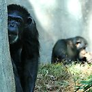 Chimps by Lolabud