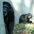 Chimps by Lolabud