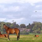 Horses Resting by Barry Thomas