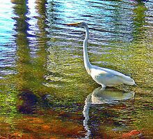 Egret In the Pond by AuntDot