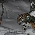 Tiger in Snow by hedgie6