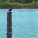 Bird on the Jetty Pole by Donnahuntriss