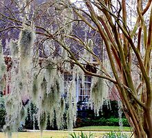 Spanish Moss - Baton Rouge, La by Scott Mitchell