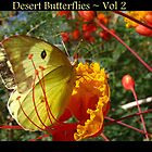 Desert Butterflies ~ Vol 2 by Kimberly P-Chadwick