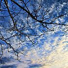 Sycamore And The Sky by Carolyn  Fletcher