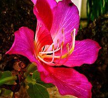 Exotic Pink Beauty by AlyZen