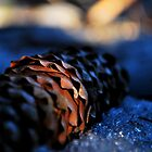 Chilled Pine Cone by Mark Williams