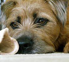 Dog with Bone by Jane Underwood