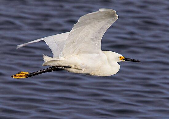 Snowy Egret In Flight by Michael  Moss