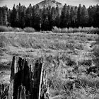 Meadow Stump by dwservingHim