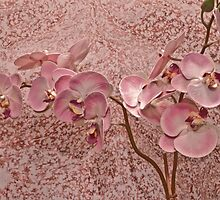 Soft Pink Orchid Blossoms by Sandra Foster