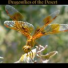 Dragonflies of the Desert by Kimberly Chadwick