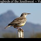 Songbirds of the Southwest ~ Vol 2 by Kimberly P-Chadwick