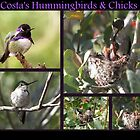 Costa's Hummingbirds & Chicks by Kimberly P-Chadwick