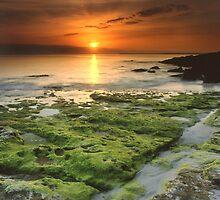 """Moss-scape"" ∞ Vincentia, NSW - Australia by Jason Asher"