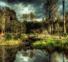 Back to the Old Woods by Pete Halewood
