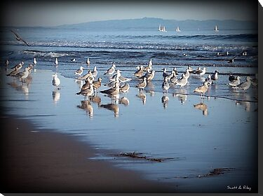 Dancing Sea Gulls by Scott Riley