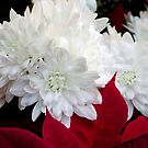 In red and White by cherylc1