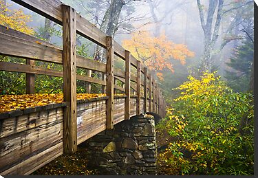 Tanawha Trail Foot Bridge - Rough Ridge Autumn Foliage NC by Dave Allen