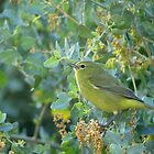Orange-Crowned Warbler ~ Sea of Green by Kimberly Chadwick