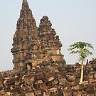 Papaya tree at Hindu temple Prambanan by BengLim