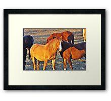 Waiting Horses Framed Print