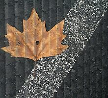 Leaf Portrait #8 by Jane Underwood